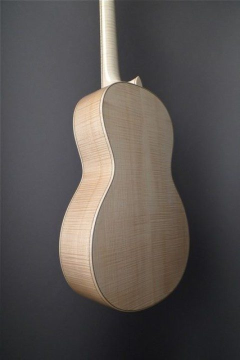 Curly Maple Back and Sides
